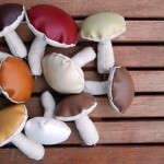 seasons_mushrooms